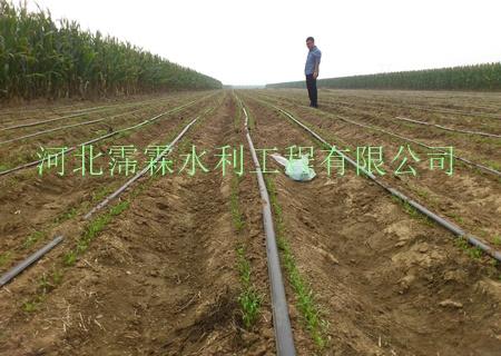 """阳泉市节水灌溉带/抗老化pe水管/厂家直销 """"膜种植""""是膜下使用滴灌的"""