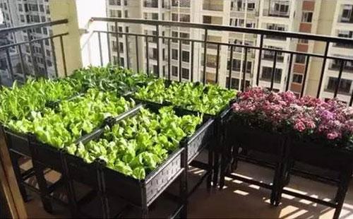 [供应]重庆家庭菜园-阳台种菜-屋顶花园种菜-尚鼎丰梦田都市农场图片