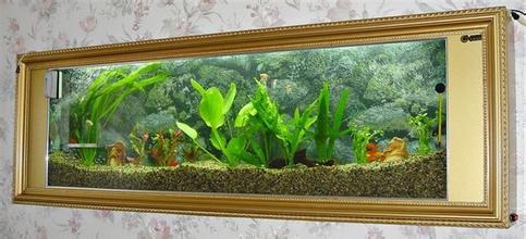 鱼缸名片背景素材
