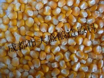 现金求购高粱大米玉米小麦豆薯类原料